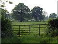 SJ6344 : Trees in a field by Nigel Williams