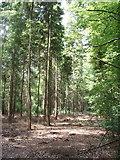 SP8302 : Hillock Wood, Hampden by David Hawgood
