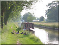 SJ5847 : Ducks beside Shropshire Union Canal by Espresso Addict