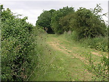TL0090 : Bridleway and Teasel by Michael Patterson