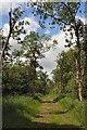 TL6469 : Chippenham Fen National Nature Reserve by Bob Jones