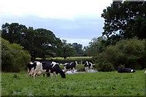 SJ6743 : Gorsecroft Farm, Audlem by Mike Harris