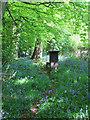 SU8193 : Bluebells and Beehives in Jane's Wood , Nr. Piddington by Jurek and Trish  Sienkiewicz
