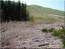 SN7784 : Cleared Forestry In Dyll Faen by John Lucas
