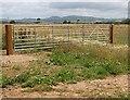SW9247 : Wheatfield behind a modern gate by Tony Atkin