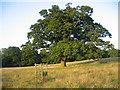 SP4349 : Farnborough Park by David Stowell