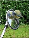 R5152 : Bird on Bike by Cat Walsh