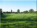 SJ5851 : Cattle pasture at Larden Green Farm by Espresso Addict