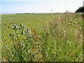 SE8864 : Farmland at SE881640 by Stephen Horncastle