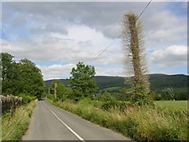S2330 : Lane to Killusty with bristly telephone poles, Co. Tipperary by Humphrey Bolton