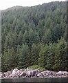 NR6080 : Jura coast by Gordon Brown