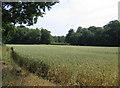 TF1203 : Woodland and farmland, Helpston, Peterborough by Rodney Burton