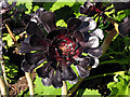 SX0554 : Succulent Plant: Eden ProjectA by Pam Brophy