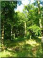 SU8113 : Wildham Wood by Simon Carey