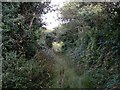 SW5732 : Overgrown lane from Bosence Road to Wheal Gilbert by Rich Tea