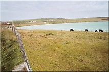 HY4449 : Sand o'Gill, Westray by Catherine Morgan