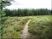 NS6900 : Southern Upland Way at  Allan's Cairn by Chris Wimbush