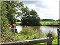 SJ8160 : Fishing pond at Dayhouse Green Farm by Steve Lewin