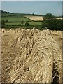 SY1995 : Stooks, Suddons Farm, Northleigh by Katy Walters