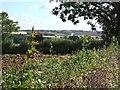 SP8120 : Buckinghamshire Countryside by Rob Farrow