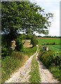 SU9409 : Footpath to Inground Plantation by Simon Carey
