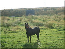 NK0137 : rough grazing near Mill of Auchleuchries by Ken Fitlike