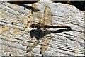 TQ2312 : Dragonfly by Glyn Baker