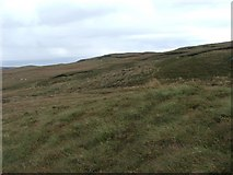 NR6208 : Near the Top of Glenmanuilt Glen. by Steve Partridge