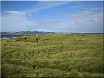 Q7523 : Banna Strand: Dunes by Nigel Cox