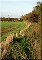TA2823 : Ottringham Ings and Westlands Plantation by Paul Glazzard