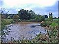SJ7159 : Warmingham: field pond near Warmingham Road by Mike Harris