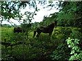 NY4059 : Horses in field near Houghton by Keith Fairhurst
