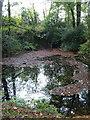 SX5358 : Lake in Boringdon Park Wood by Derek Harper