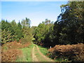 TL0193 : Bridleway through Park Colsters, north-east of Shire Hill Lodge by Tim Heaton