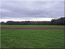 SJ7345 : Checkley - view towards Checkley Wood by Mike Harris