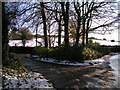 SX0356 : Beech trees after snow by bernard may