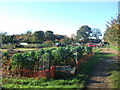 TF6522 : Allotments in South Wootton, Norfolk. by Andy Peacock