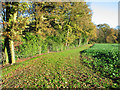 SJ6469 : Path near Vale Royal Abbey by Ian Nadin