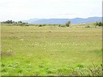 V7892 : Bog, Ownagarry by Richard Webb