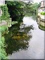 R3377 : River Fergus, Ennis by Francoise Poncelet