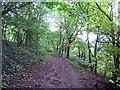 SE8721 : The Path through Hillside Plantation by David Wright