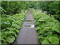 SK3255 : Cromford Canal Footpath Greenery by Alan Heardman