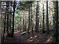 SM9624 : Little Treffgarne Woods by ceridwen
