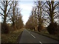 SP9360 : Tree Avenue on Dungee to Hinwick Road by Nigel Stickells