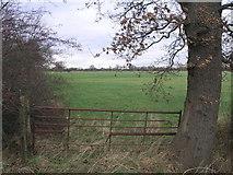 SE6614 : Oak Gate Post by Michael Patterson