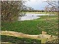SJ4661 : Pond near Hatton Hall by John S Turner