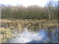 TG3425 : High water levels in Broad Fen, Dilham, Norfolk by Rodney Burton