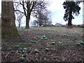TF4300 : Snowdrops at Stags Holt by Tony Bennett