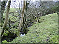 NS3986 : Stream and surrounding woodland by Stephen Sweeney