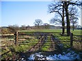 SJ4957 : Farmland Gate off Dark Lane by John S Turner